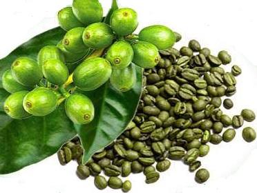 zelená káva na hubnutí recenze